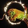 Цирки в Шуе