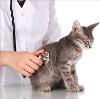 Ветеринарные клиники в Шуе